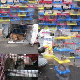 (Penjual hewan di depan BIP (Doc. Pribadi)