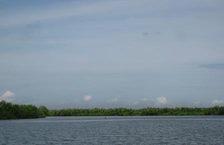 Hamparan Hutan Mangrove